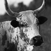 The Nguni Gallery (Monochrome)