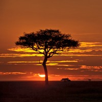 African and Southern African Landscapes