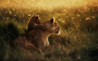 african_lioness_with_cub