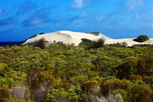 Dune in the Fynbos