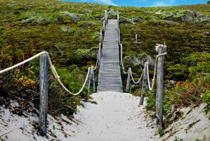 Walkway in the Dunes