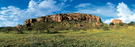 Mapungubwe Hill with a carpet of yellow tribulus in the foreground, Mapungubwe Cultural Landscape -
