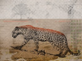 Leopard - Wildlife Art Print