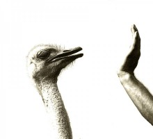 Ostrich speaking to the hand